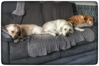 Skye, Gus & Meg