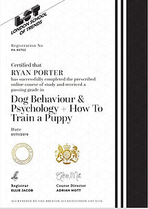 Dog behaviour certificate