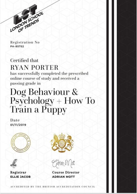 Puppy Training.