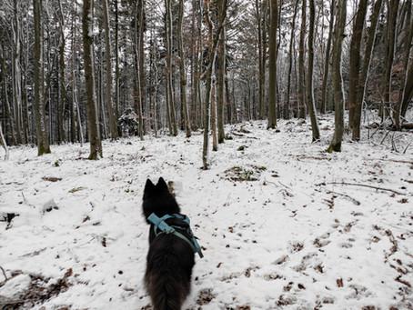 PfalzFiasko Short Trail Challenge