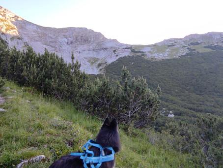 Urlaub in den Alpen