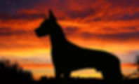 great-dane-silhoutte-wide-desktop-wallpa