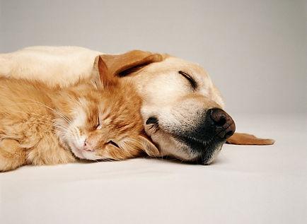 Cat dog sleeping.jpg