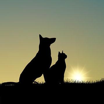 cat dog sunset.jpg