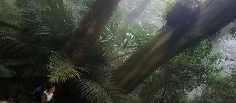 Learn to Hike in Taiwan 2: Five Finger Mountain (五指山)