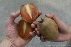 China-Vietnam Border Sapodilla Fruit