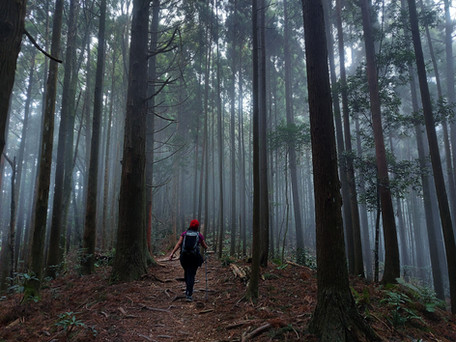 Learn to Hike in Taiwan 3: Gaotai Mountain and the three Daotian Peaks (高台山-小,中,大島田山縱走)