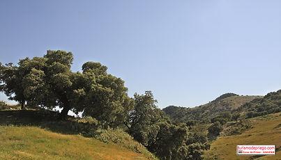 la vonvivencia de monte bajo mediterraneo y olivar, Priego de Córdoba
