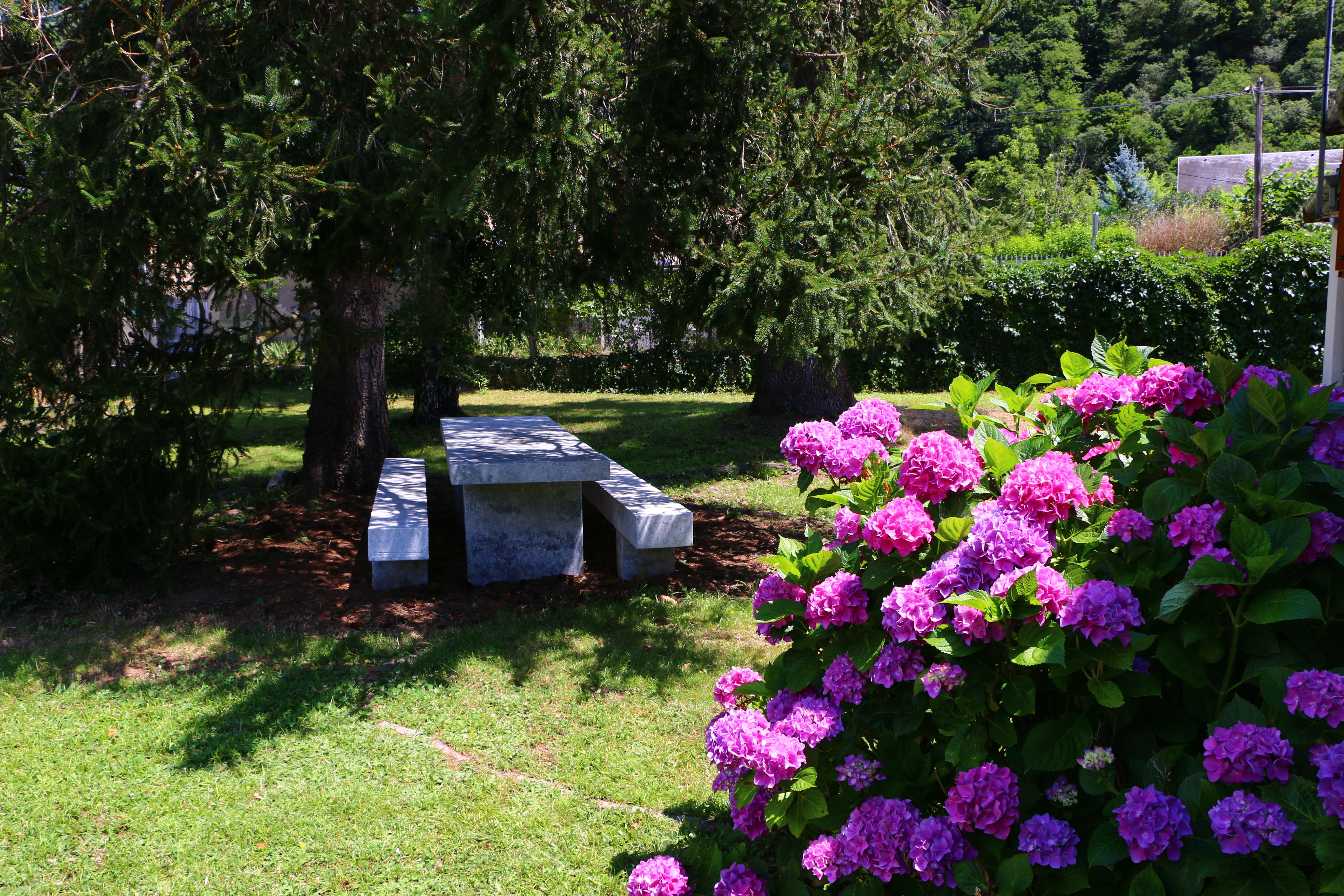 Table de jardin et hortensia