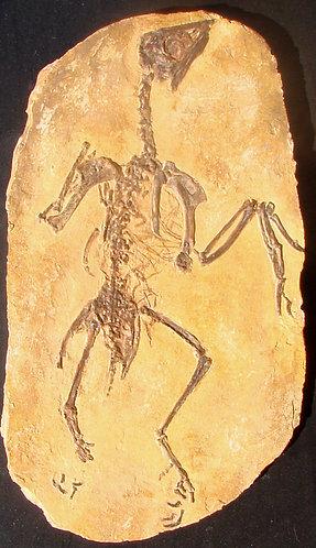 Moulage Oiseau fossile, Confuciusornis sanctus à vendre
