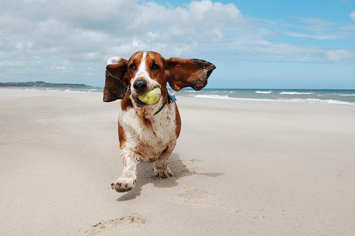 Dog-on-beach-3