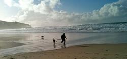 Dogs on Whitesand Bay