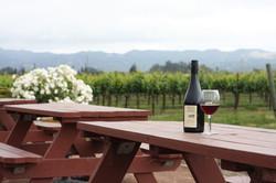 Picnic at a Vineyard