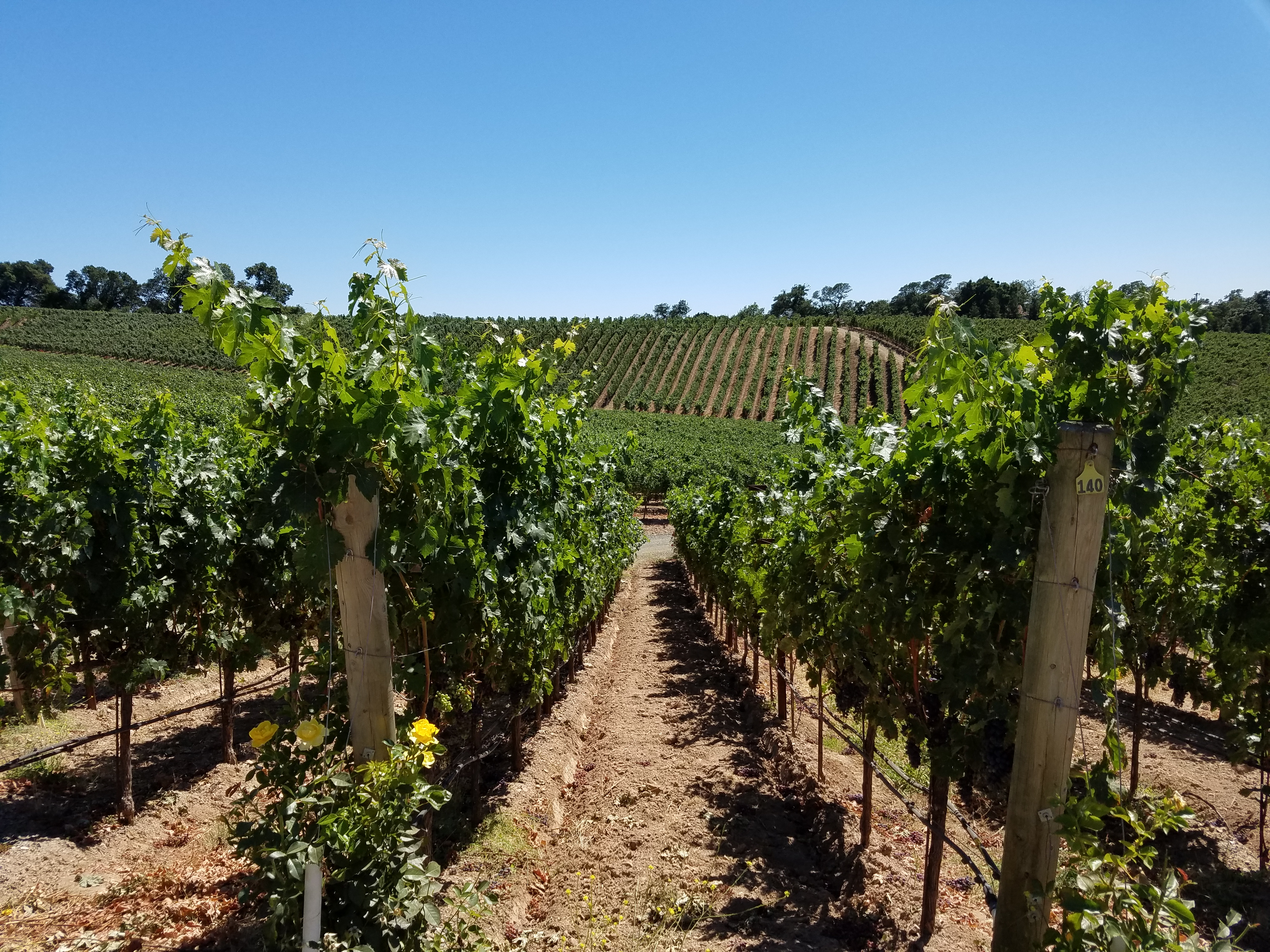 Palmaz Vineyards