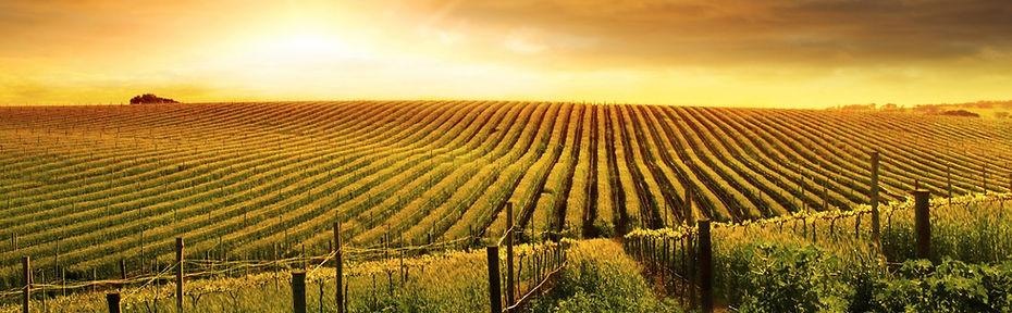 Napa Limo Wine Tours