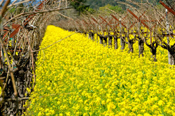 Spring in the Wine Country