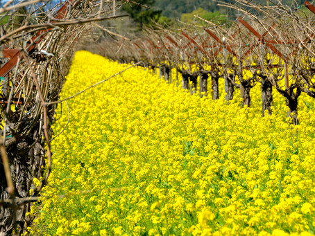 Explore Napa Valley Guide