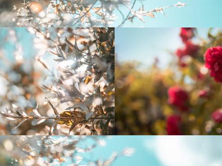 Kwiaty na koniec lata