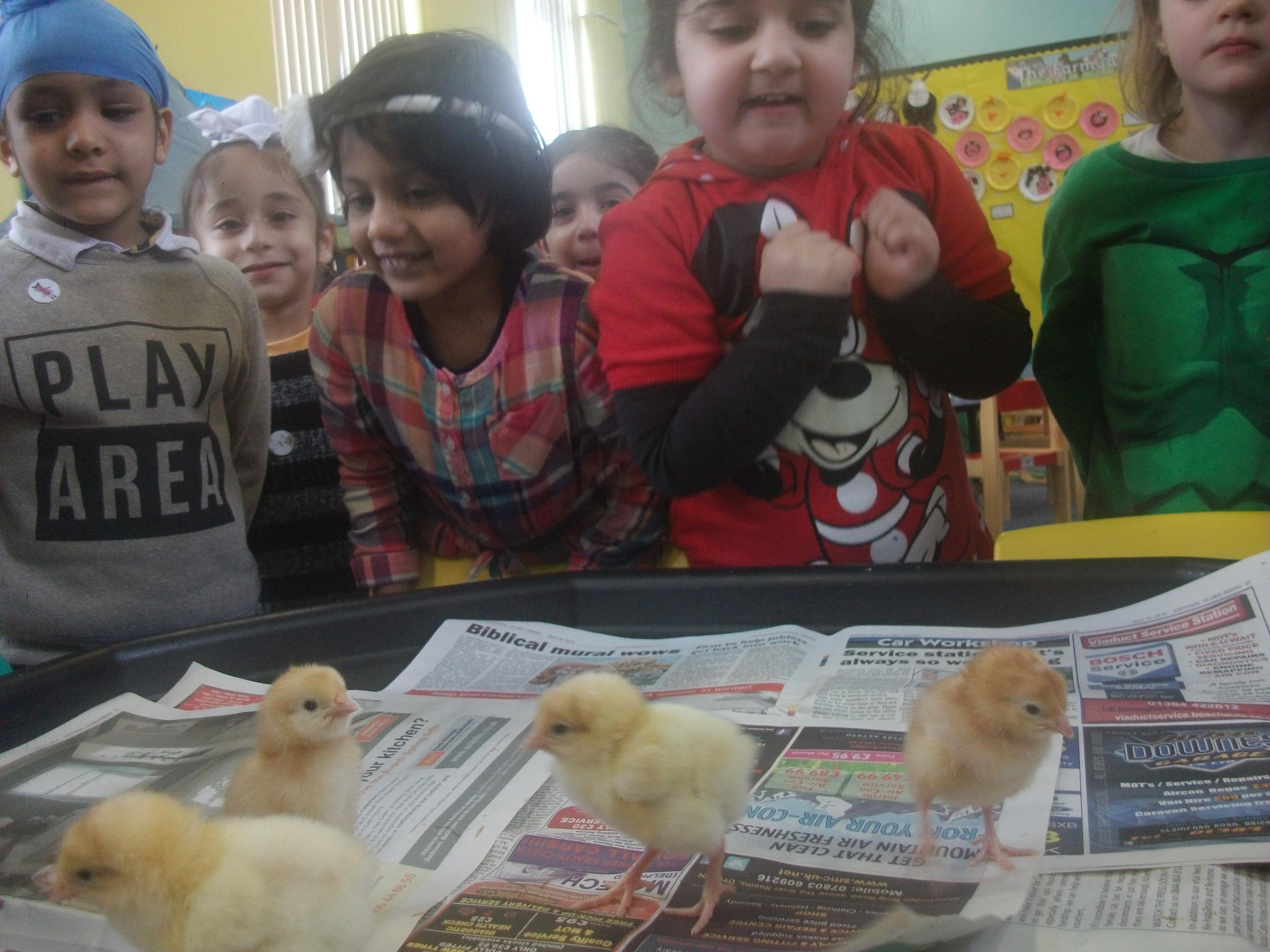 Nursery Chicks