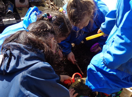 Forest School - Nursery - Bug Hunting