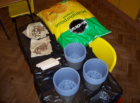 Year 3 Science Investigation