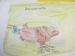 Year 5 Croc and Bird art work (4)