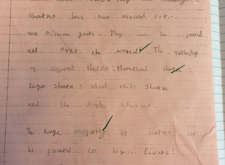 English – Reports about Sharks
