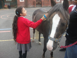 Year 5 Stable Relationships