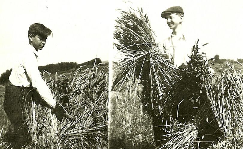 Hanus Grosz, right, and Karel Grosz working in a field in Warborough, Britain. Credit Anita Grosz