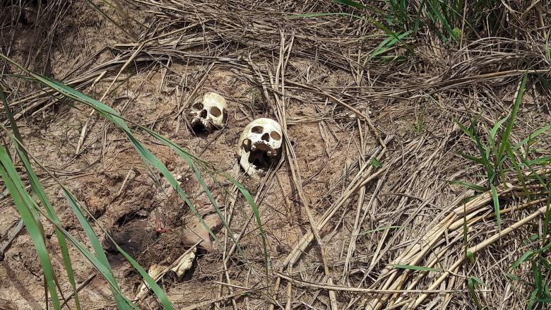 Human skulls suspected to belong to victims of a recent combat between government army and Kamuina Nsapu militia are seen on the roadside in Tshienke near Kananga, the capital of Kasai-central province of the Democratic Republic of Congo, March 12, 2017. REUTERS/Aaron Ross