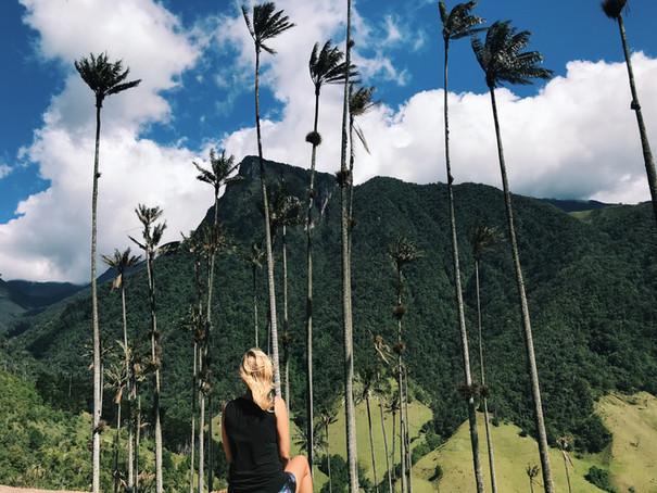 Salento - Valle de Cocora