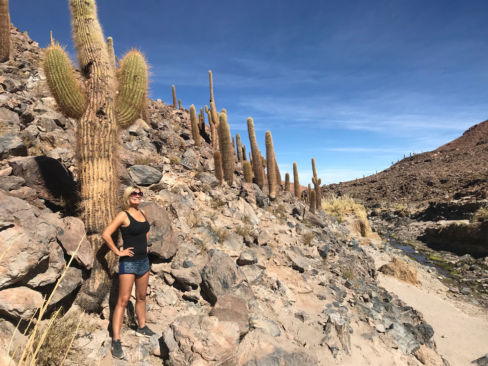 Chili - Atacama desert & Cactus Valley