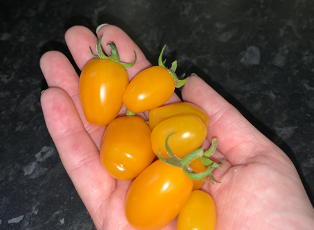 Happiness Is Home Grown Tomatoes
