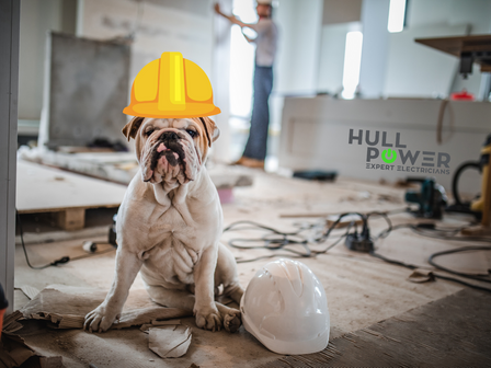 Protecting your pets from Electrical Hazards