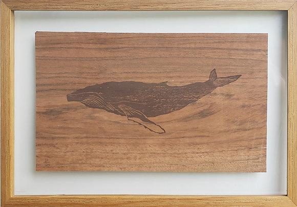 Baleia Jubarte Madeira