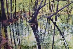 Pocomoke Spring