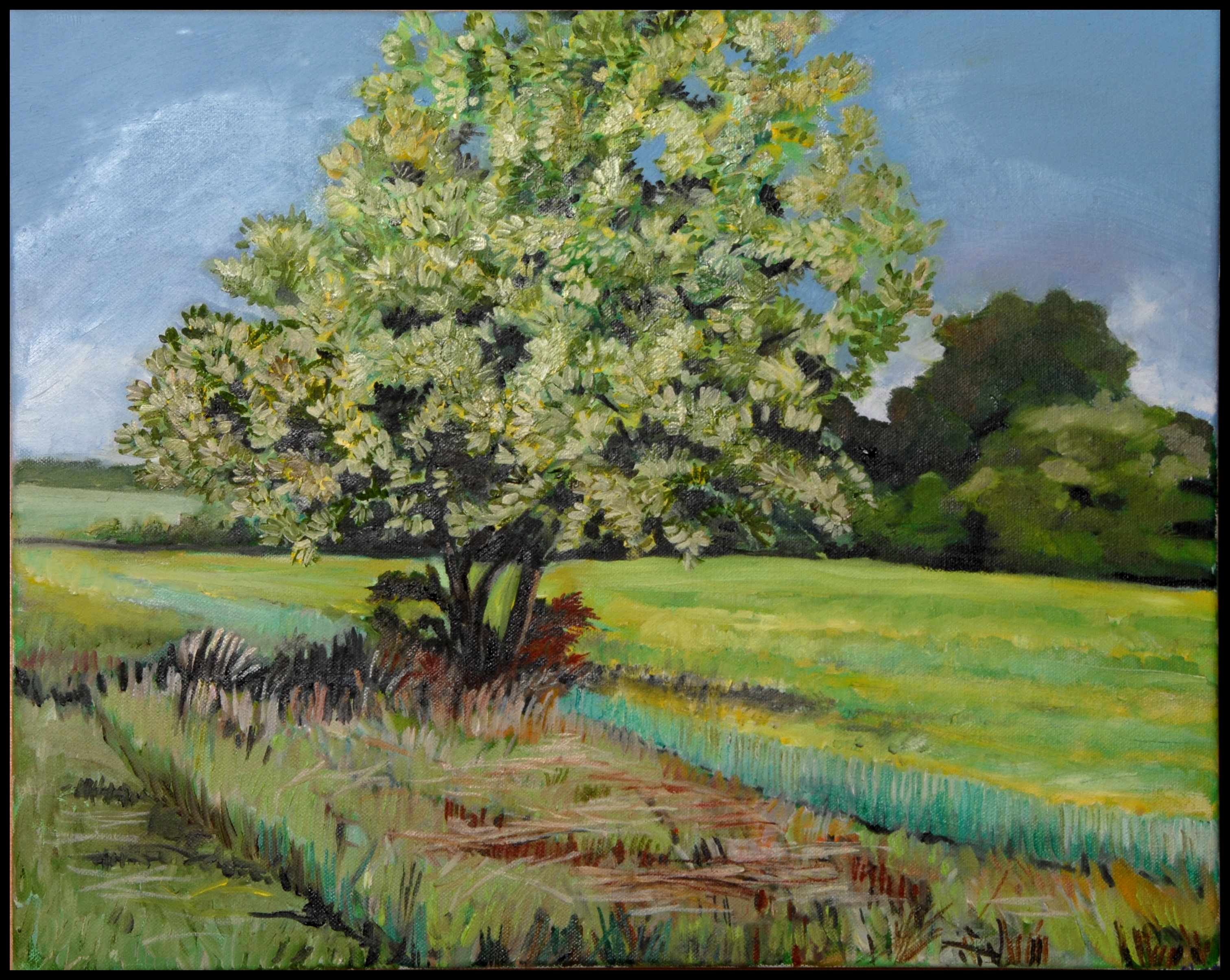 Late Spring Tree 16 x 20 oil on canSOLD