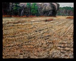Winter Field 16x20 oil on canvas