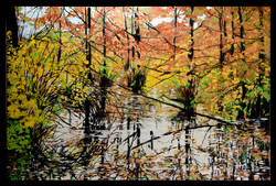 Bald Cypress 24x36 oil on canvas SOLD