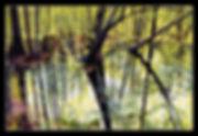 DSC_2125rpwPococmokeSpring 2nd image.jpg