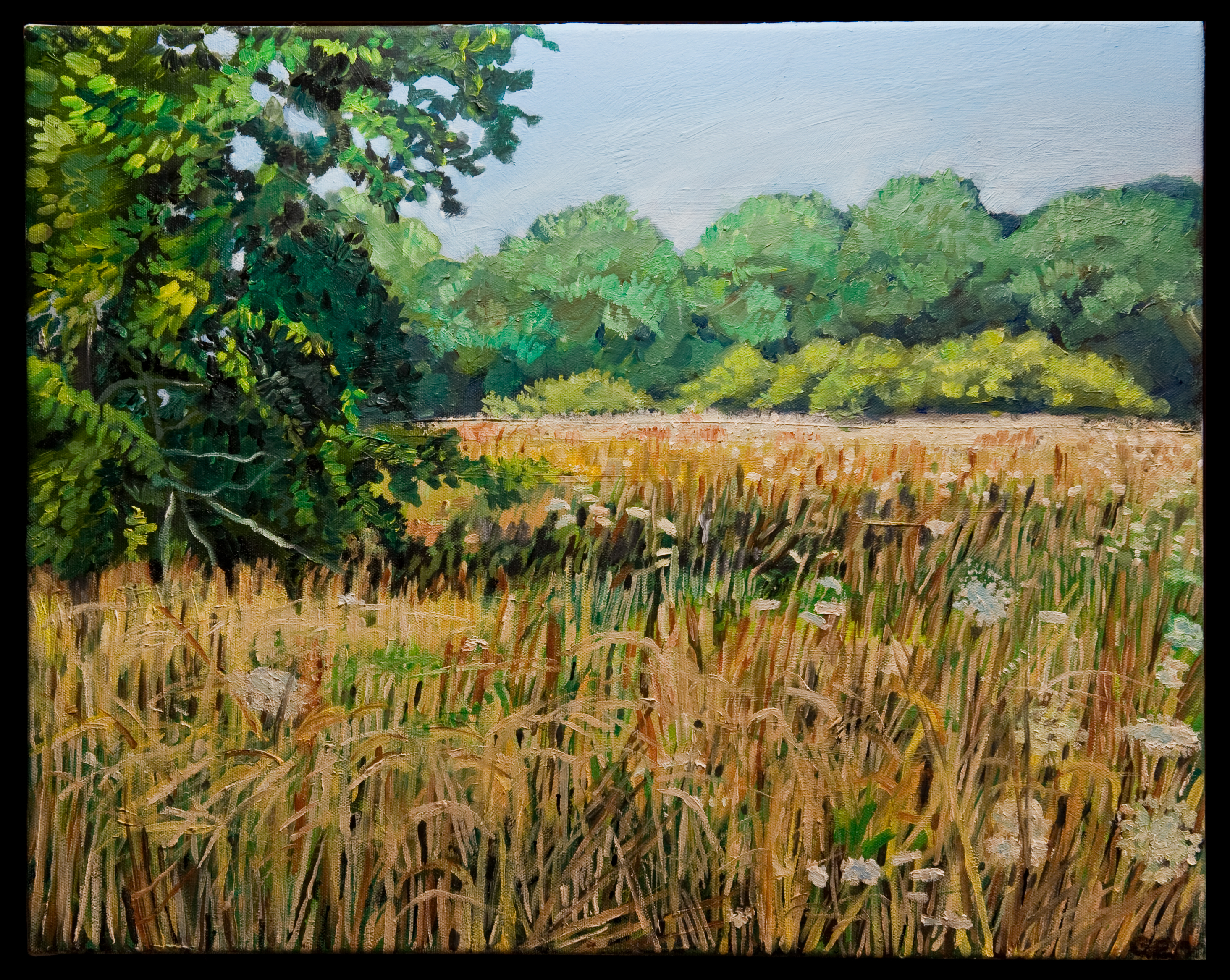 Meadow 16 x 20 oil on canvas SOLD