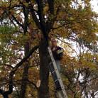 Baumschnitt-2.jpg