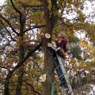 Baumschnitt-4.jpg
