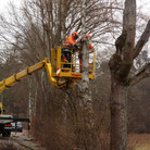 Baumfällen 2