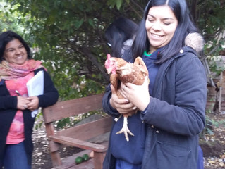 Visita Educativa Colegio San Francisco de Curimon