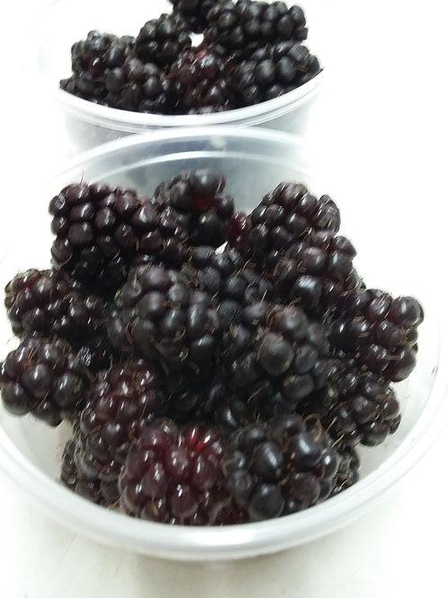 Boysenberry fresco mes de Noviembre