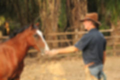 Tropical Horseback Riding Retreats | Equestrian Retreats Costa Rica | Tropical Equestrian Retreats