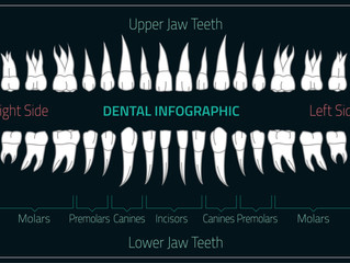 Types of Teeth & What They Do