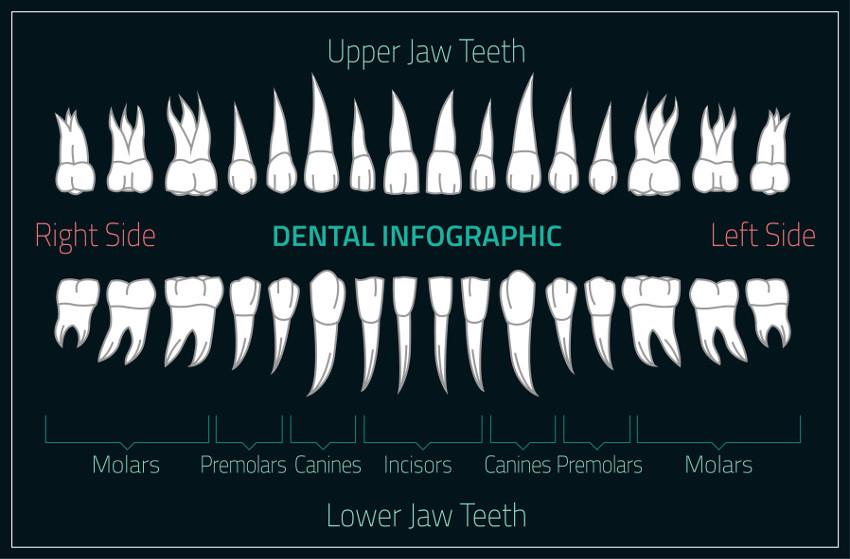 emergency dental teeth st. charles, mo dentist