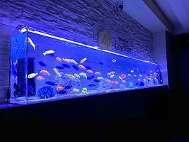 福島 クラブ 水槽 熱帯魚